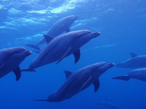 イルカの画像 p1_26